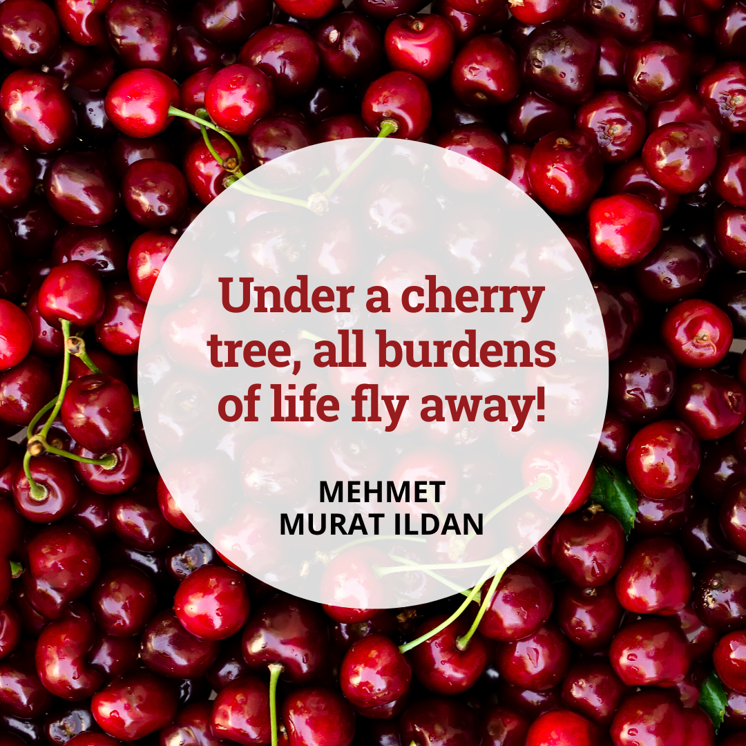 The benefits of a cherry-enriched diet